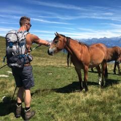 Paarden op de Monte Bregagno